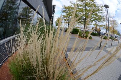 Spaulding Charlestown - Plants