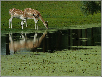 Serengetipark Hodenhagen (Germany)