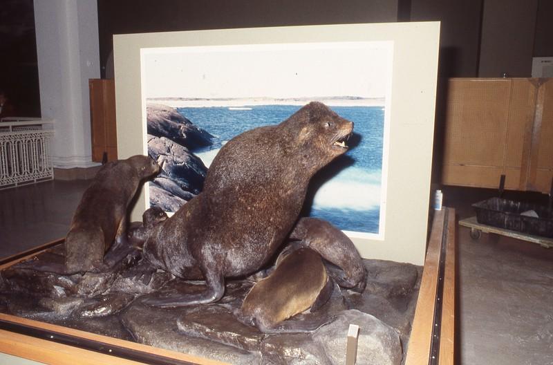 1995_CMNH_North-American-Wildlife-Hall_021.jpg