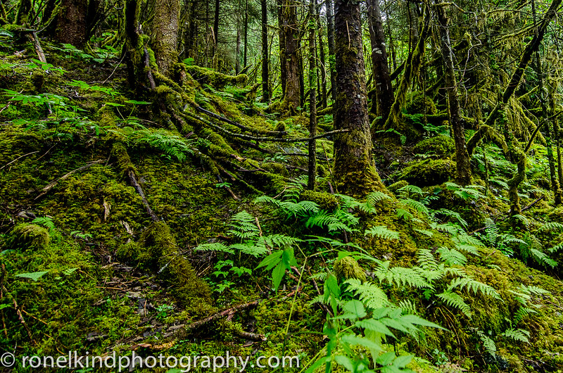 Alaska-0146.jpg