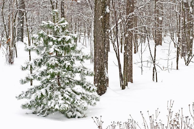 20131227 new snow-6939 v5.jpg