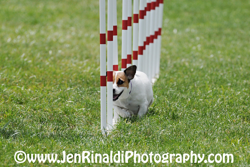 Dog Agility - Freehold - 5/30/09 JoJo
