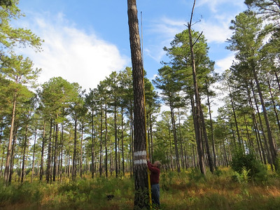 Piney Grove Preserve Habitat Mgt