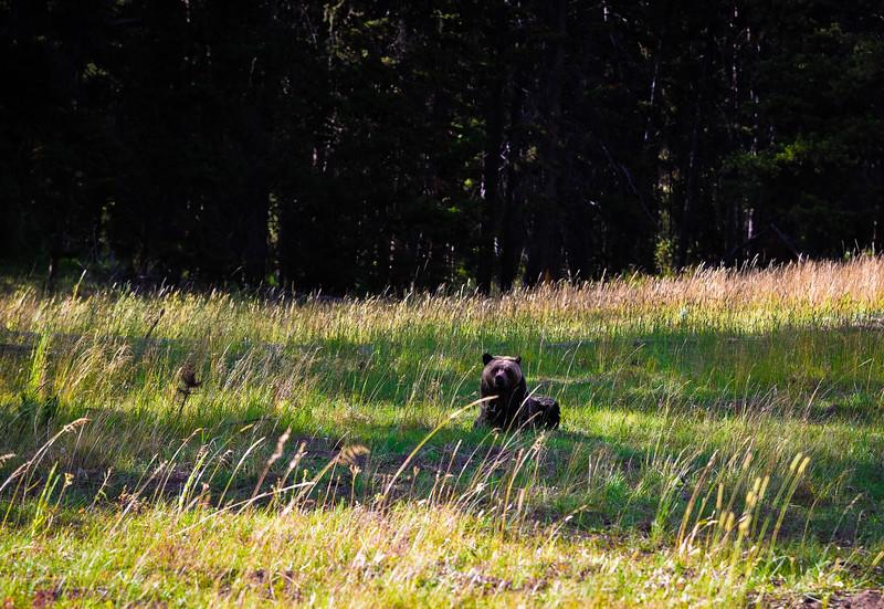 yellowstone wildlife sanctuary red lodge montana