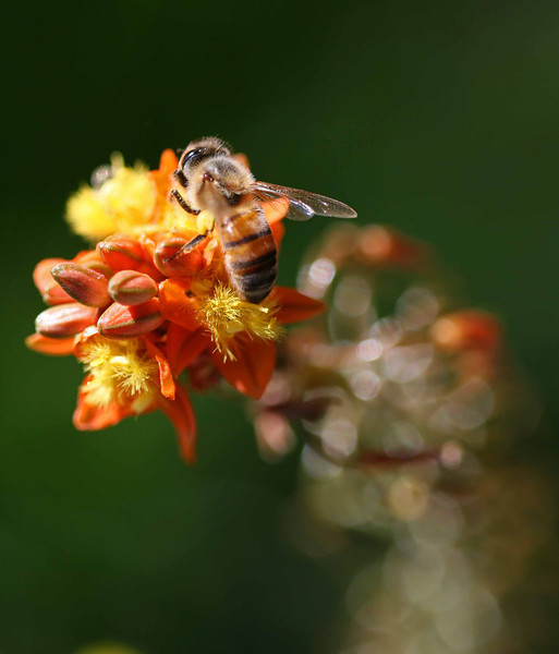 Bee 6.jpg