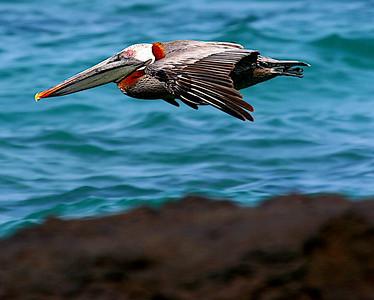Galapagos 2005