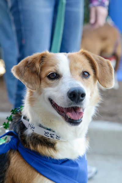 20110312 PetSmart Adoption Event-35.jpg