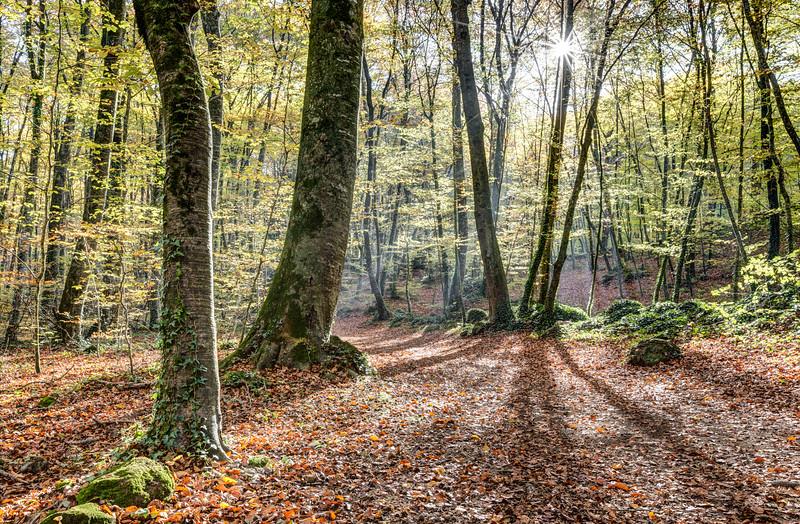 Fageda d'en Jordà, Autumn 2016 (Catalonia)