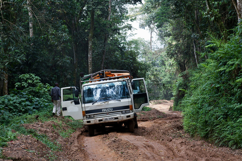 Road between Buhoma and Ruhija (Bwindi Impenetrable NP)