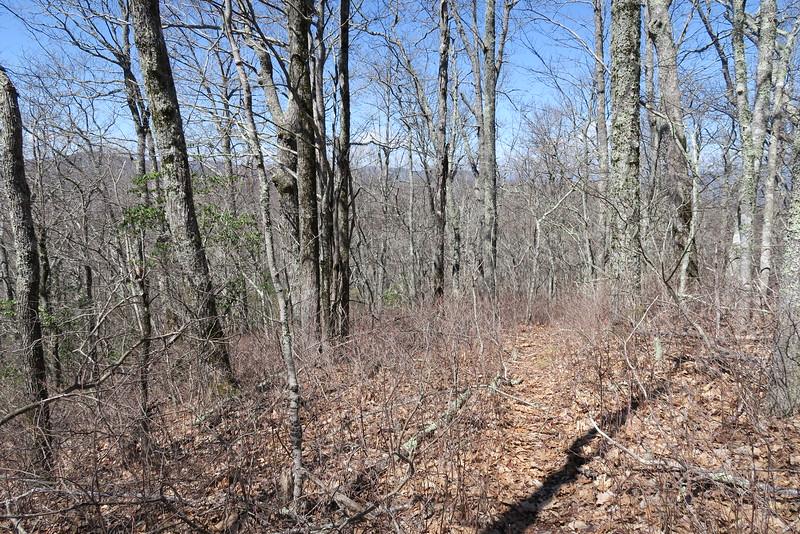 Shelton Pisgah Trail - 4,240'