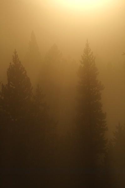 Golden fog [September; Yellowstone National Park, Wyoming]