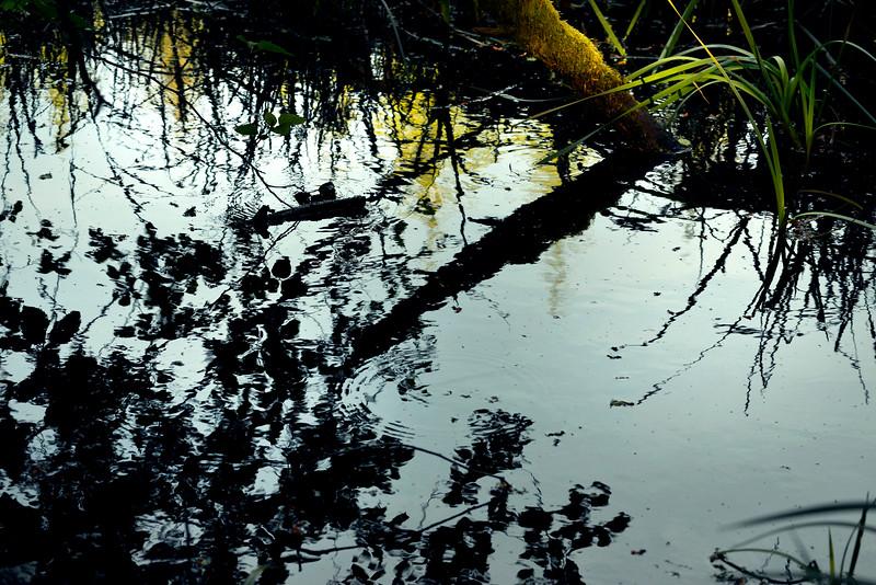 wetlands2_02.jpg