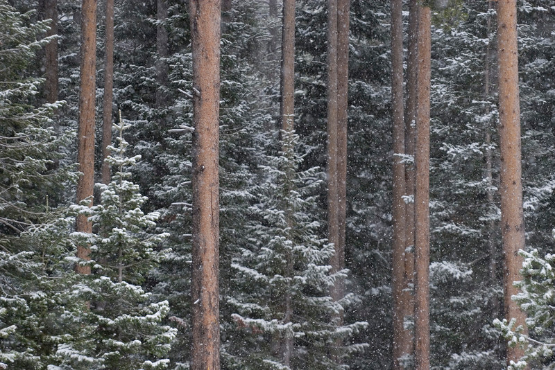 forest-snow2.jpg