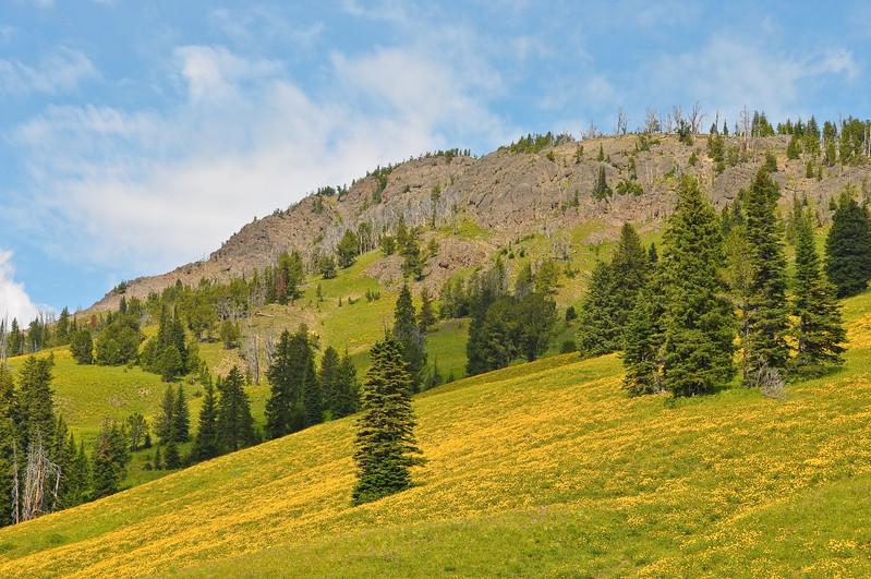 Near Dunraven Pass, Yellowstone National Park