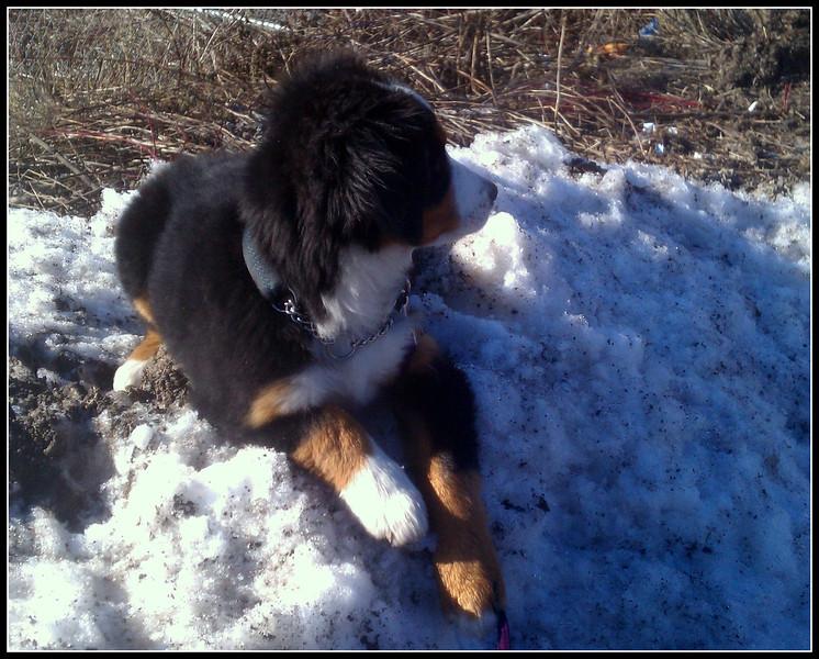 2012.3.8 Winnie.46.jpg