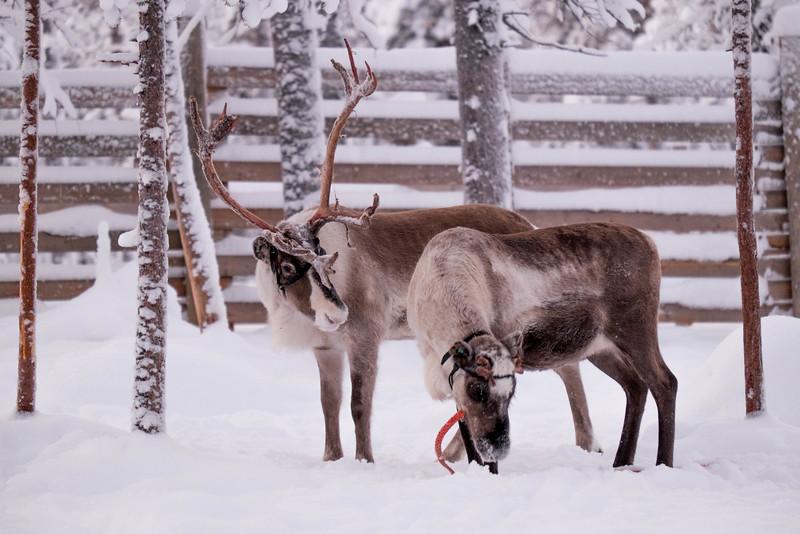 Finland_160117_94.jpg