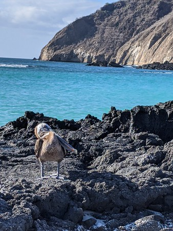 Galápagos Aboard the National Geographic Endeavour II