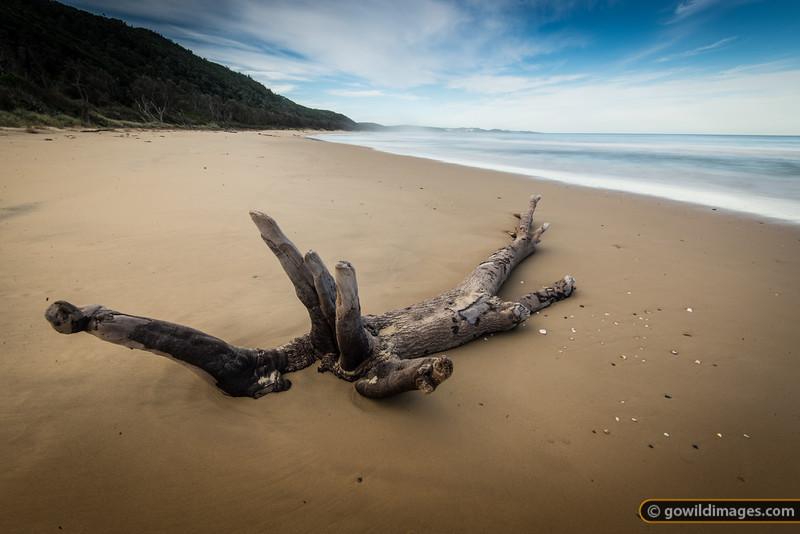 Drift wood on a deserted beach near Croajingalong NP