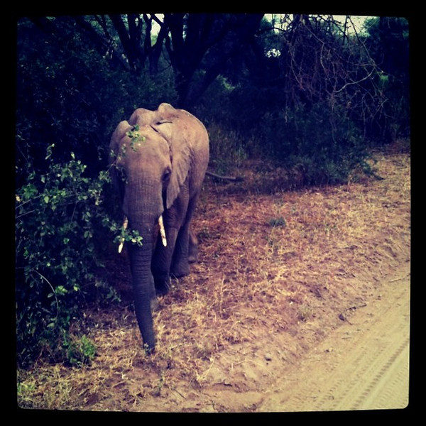 Elephant crossing - Lake Manyara Park, Tanzania