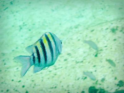 Snorkeling in Quintana Roo
