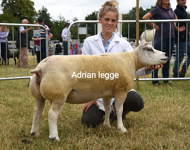 Ashby Show 2019