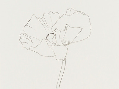 Kelly_Poppy515x384.jpg