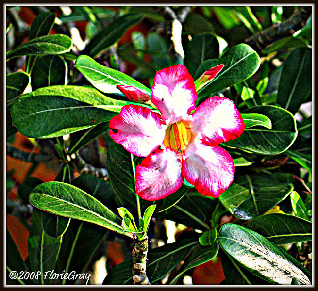 Pink Starflower for a Hero  For M., who had a mastectomy this morning and is now cancer-free!