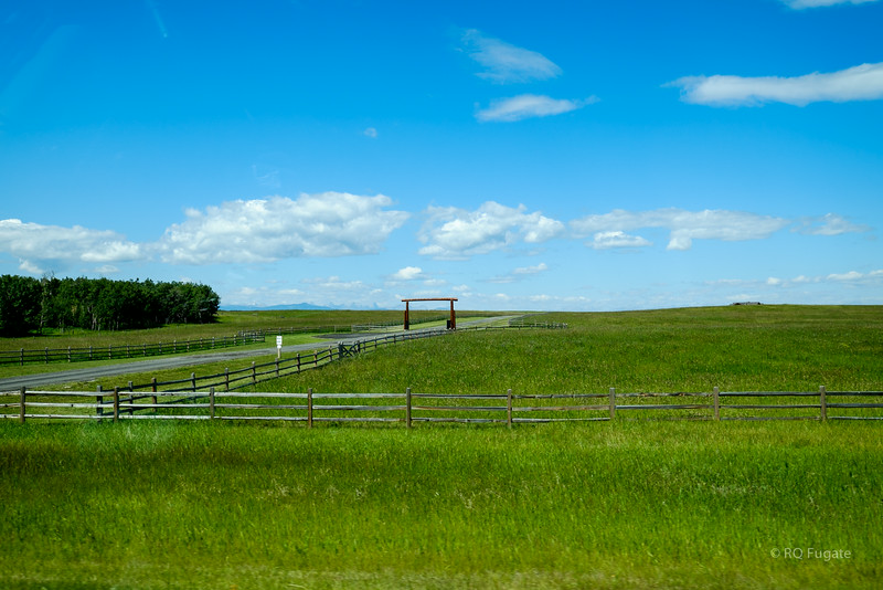 We took the route south of the Trans-Canada Highway known as Cowboy Trail - Route 22. Lots of farming and cattle in the foothills of the Rockies.
