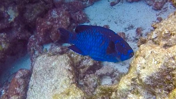 Ciesla-GOPR7765 - blue fish.jpg