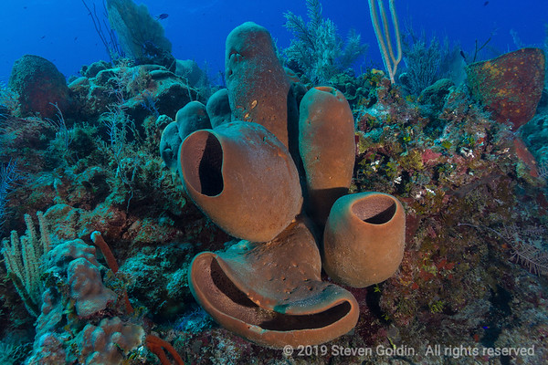 Diving on Little Cayman Island