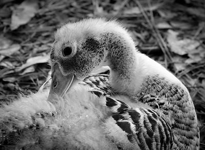 My Duck Friends