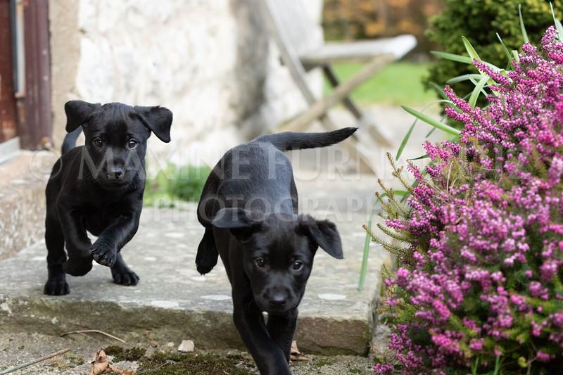 Weika Puppies 24 March 2019-6417.jpg