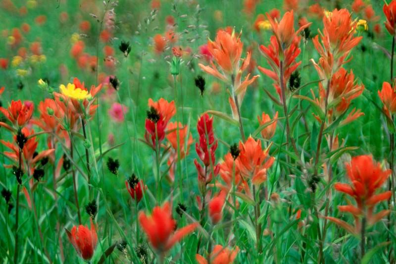 amh FLOWERS (1290).jpg