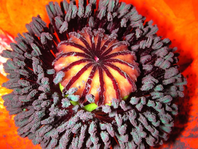 poppy 66  www.tabblo.com/studio/stories/view/251143/