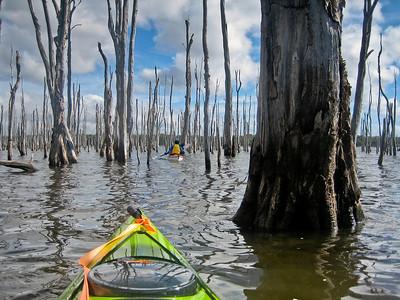 Budgewoi_Lake Munmorah_Stick Forest