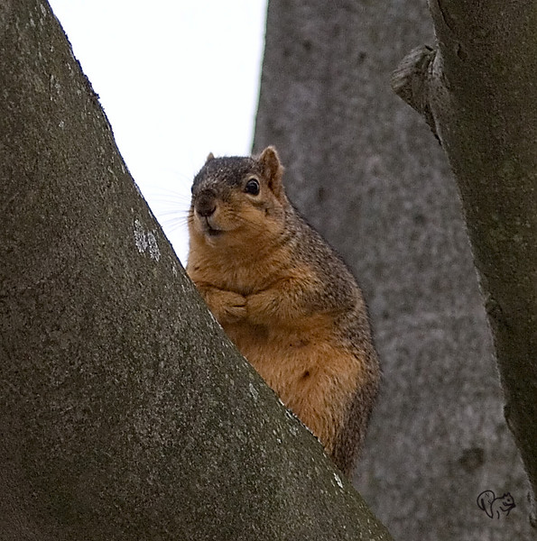 Rarely see any squirrels at Dawes. This shot was taken in the morning while it was still very cloudy.