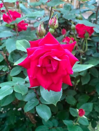 Brooklyn Flower Show