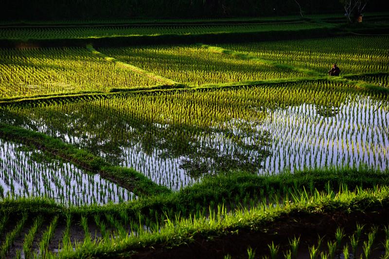 160220 - Bali - 3069.jpg
