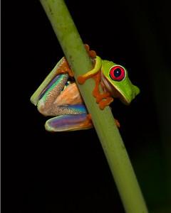 Costa Rica (4/12)