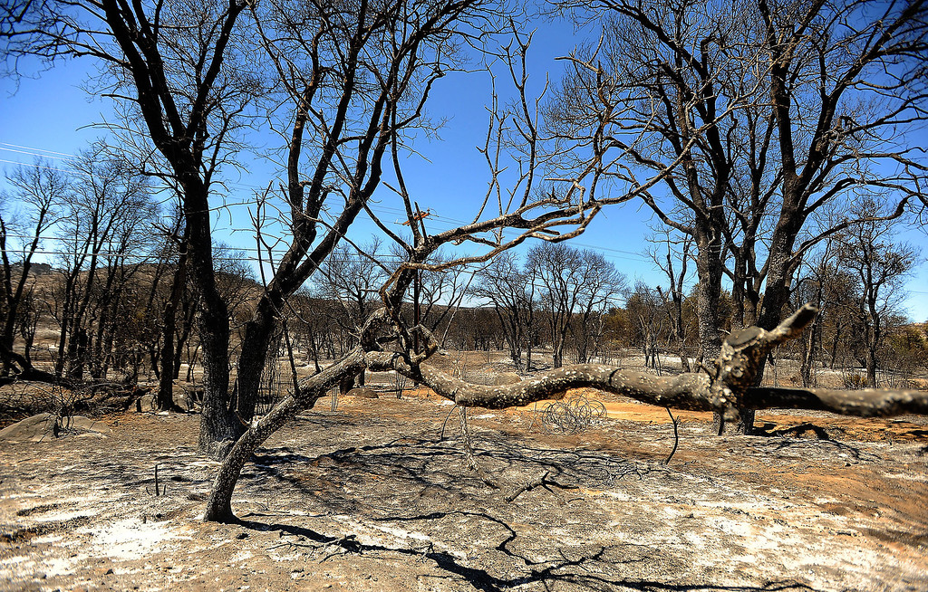 . A view of charred terrain caused by the Silver Fire as seen along Twin Pines Road in the mountains south of Banning August 10, 2013.  GABRIEL LUIS ACOSTA/STAFF PHOTOTGRAPHER.