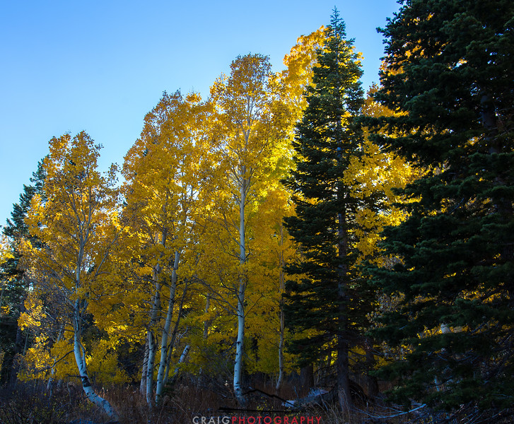 Hope Valley Colors of Fall #3