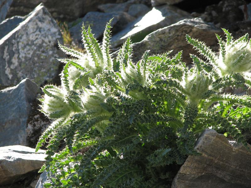 Torreys Peak 7-13-06 062.jpg
