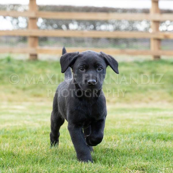 Weika Puppies 24 March 2019-8782.jpg