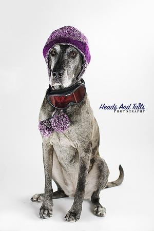 Indoor Dog Photography Portraits