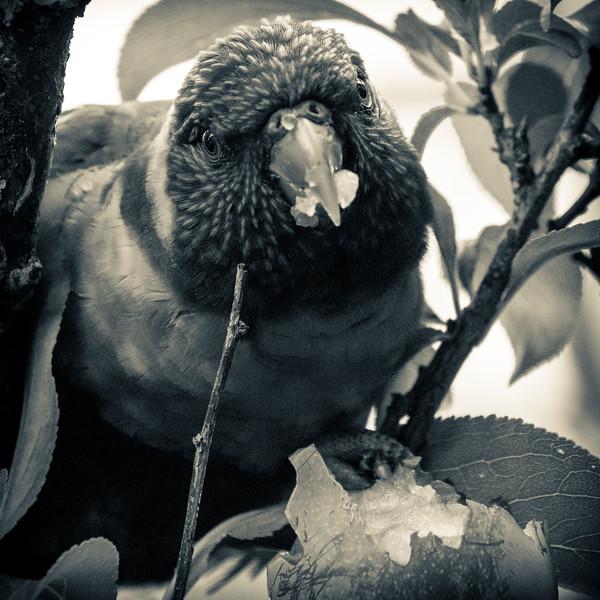 121818  birds  _8.JPG
