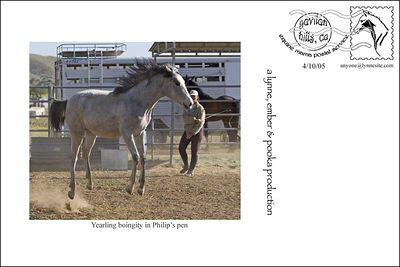 4-Yearling Twix & Family