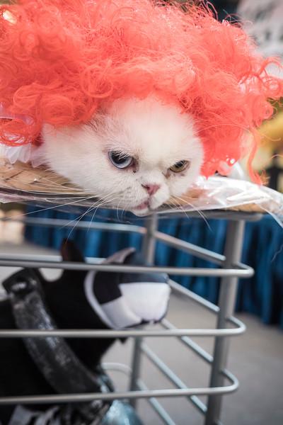 VividSnaps-The-Seletar-Mall-CAT-Dress-Up-Contest-300.jpg