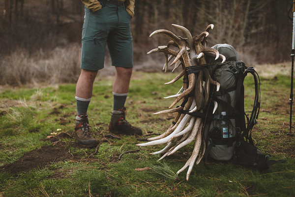 Shed Hunting April-19