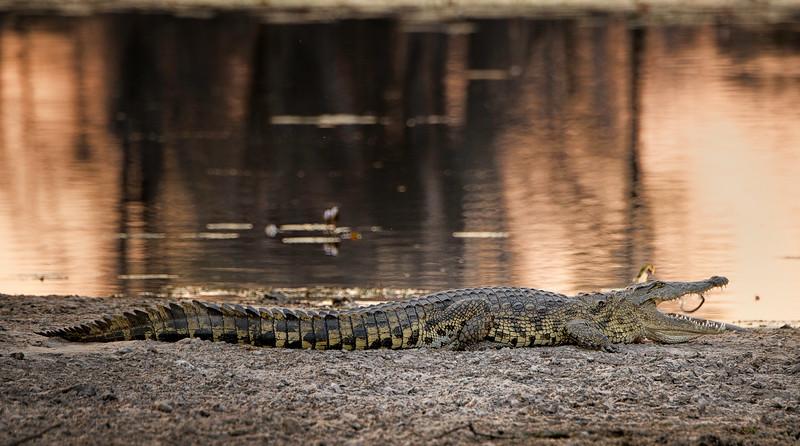 2014-08Aug-Okavango Masters-89-Edit.jpg
