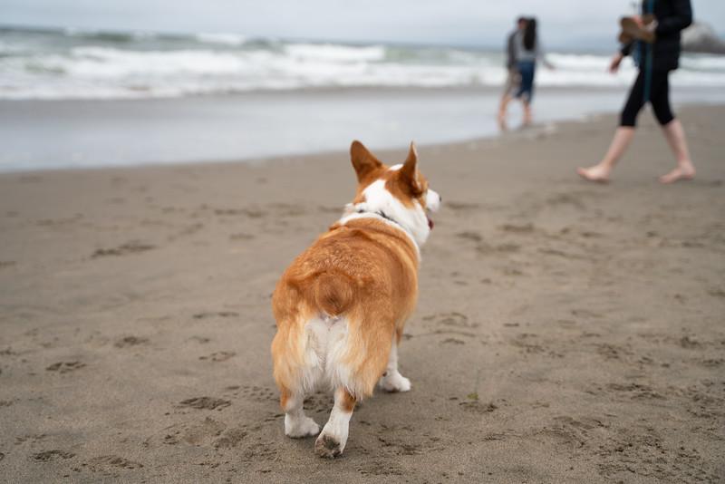Dogs-177.jpg